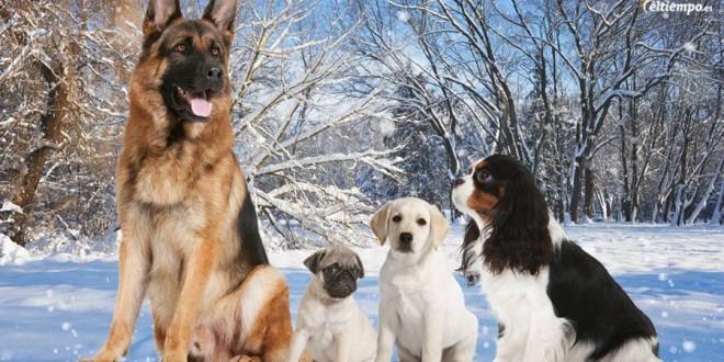 Consejos para pasear a tu perro ¡con mucho frío!