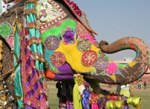 FestivalDeLosElefantes_Jaipur_India1