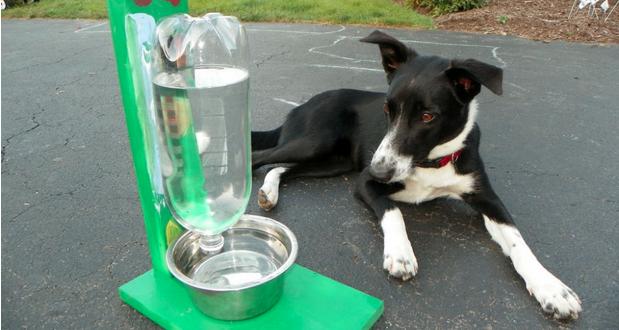 Como hacer un recipiente que se autorellena para mascotas