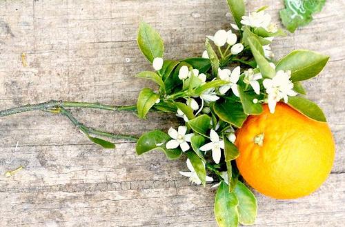 Perfuma tu hogar con frutas cítricas