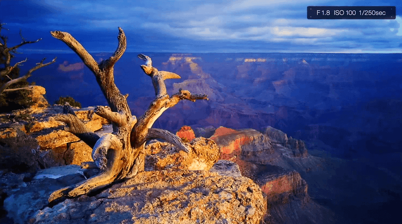 Primer plano y paisaje tomados con el LG G4. / © Colby Brown