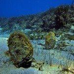 fondos-marinos-DSC07215