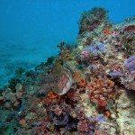 fondos-marinos-DSC07261