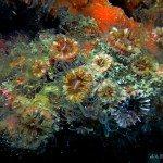 fondos-marinos-DSC07262