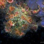 fondos-marinos-DSC07265
