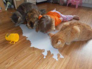 no-lloremos-sobre-la-leche-derramada-con-un-traguito-basta