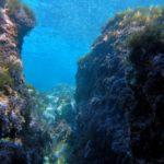 fondos-marinos-12122016dsc09561