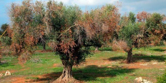 El Govern Balear prohíbe exportar plantas